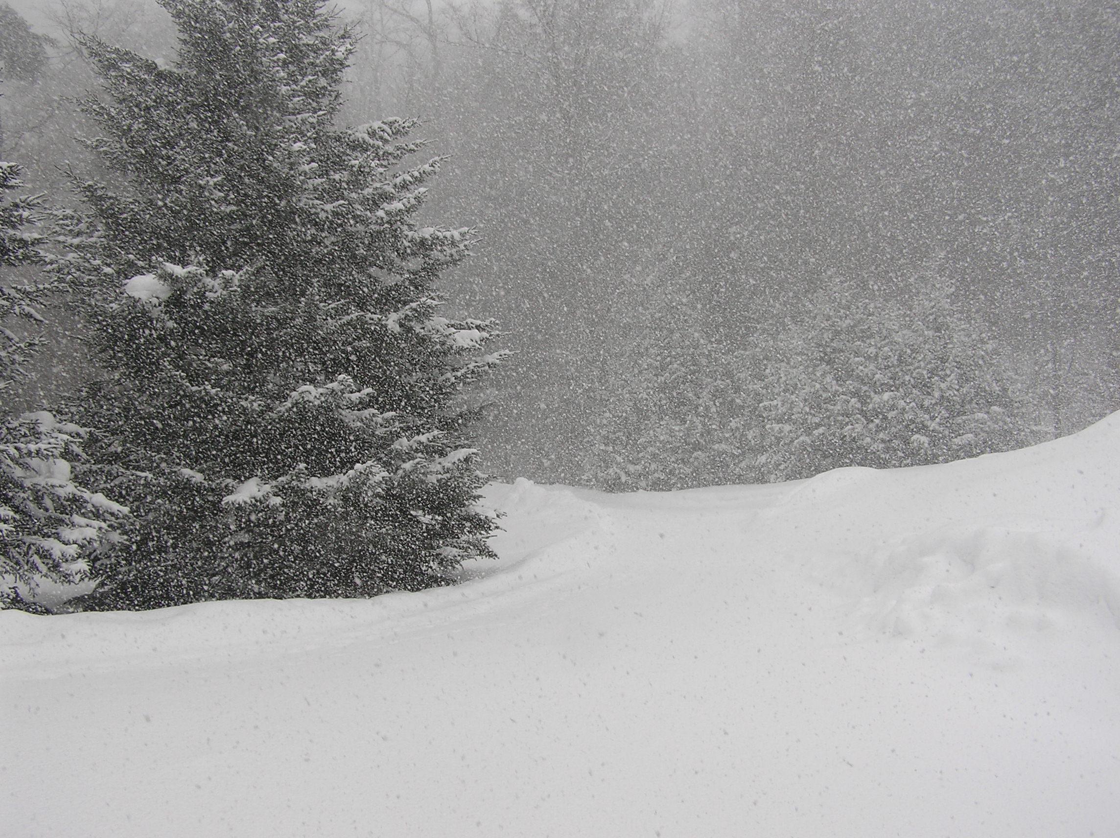 Winter by Michelle Brown Garcia