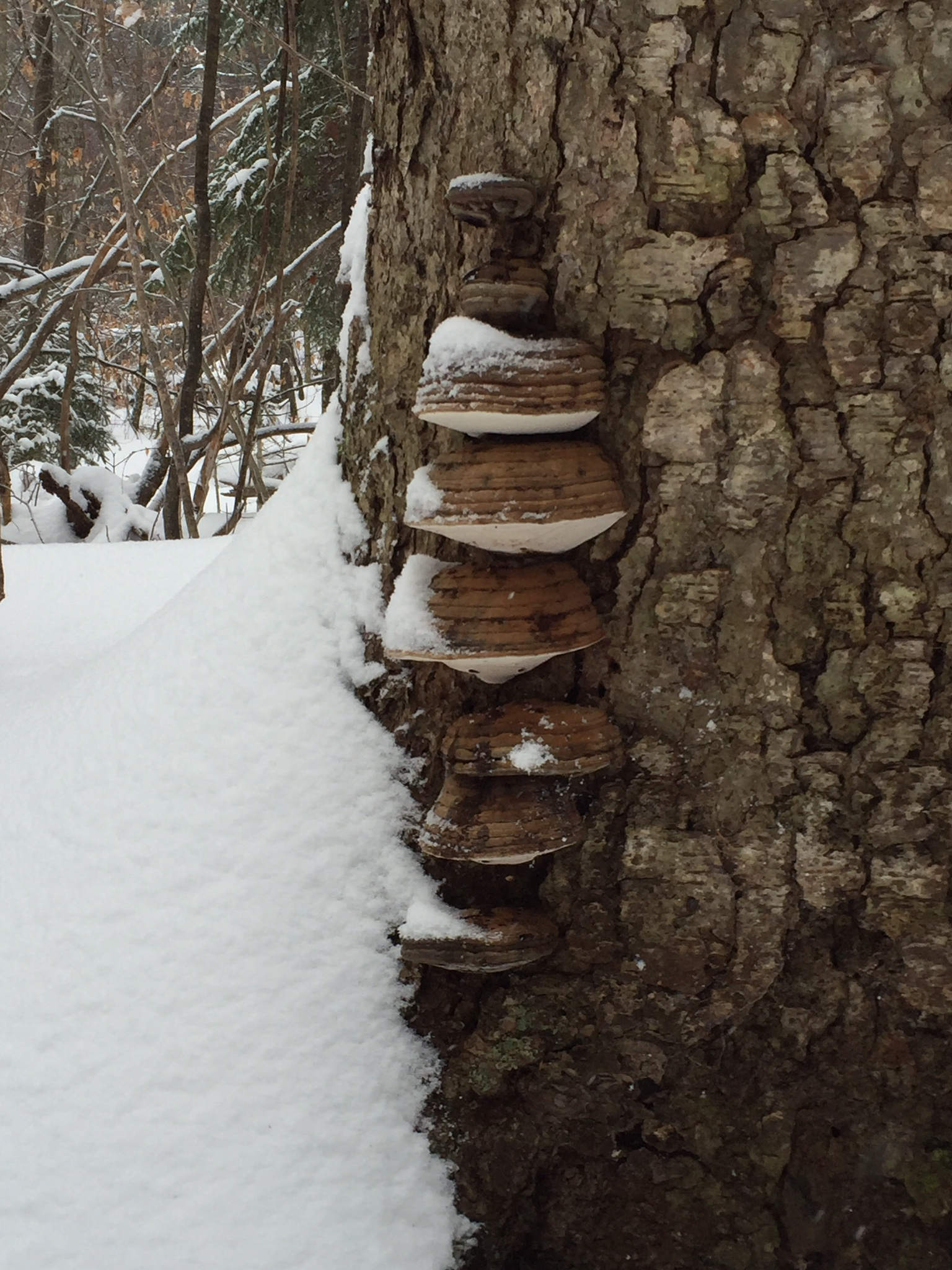 Fungi by Sandy Day