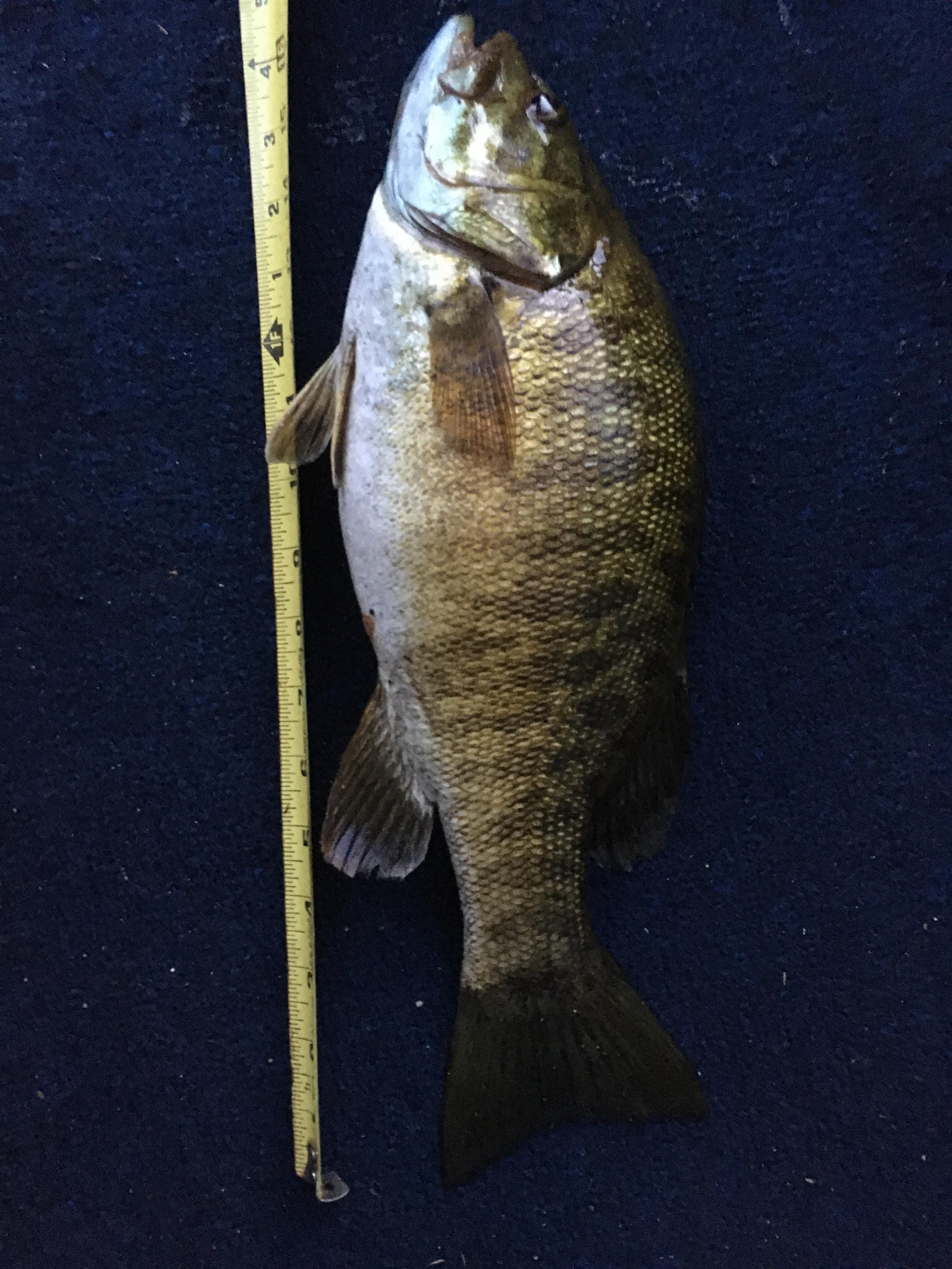 Philip Kokotailo Bass 16