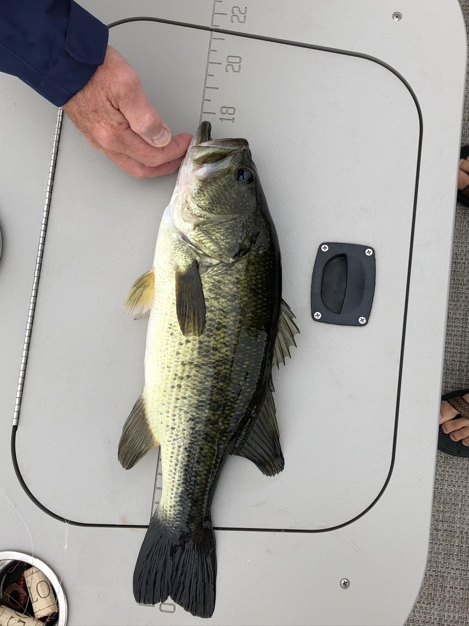 W. Ballard Bass July 13