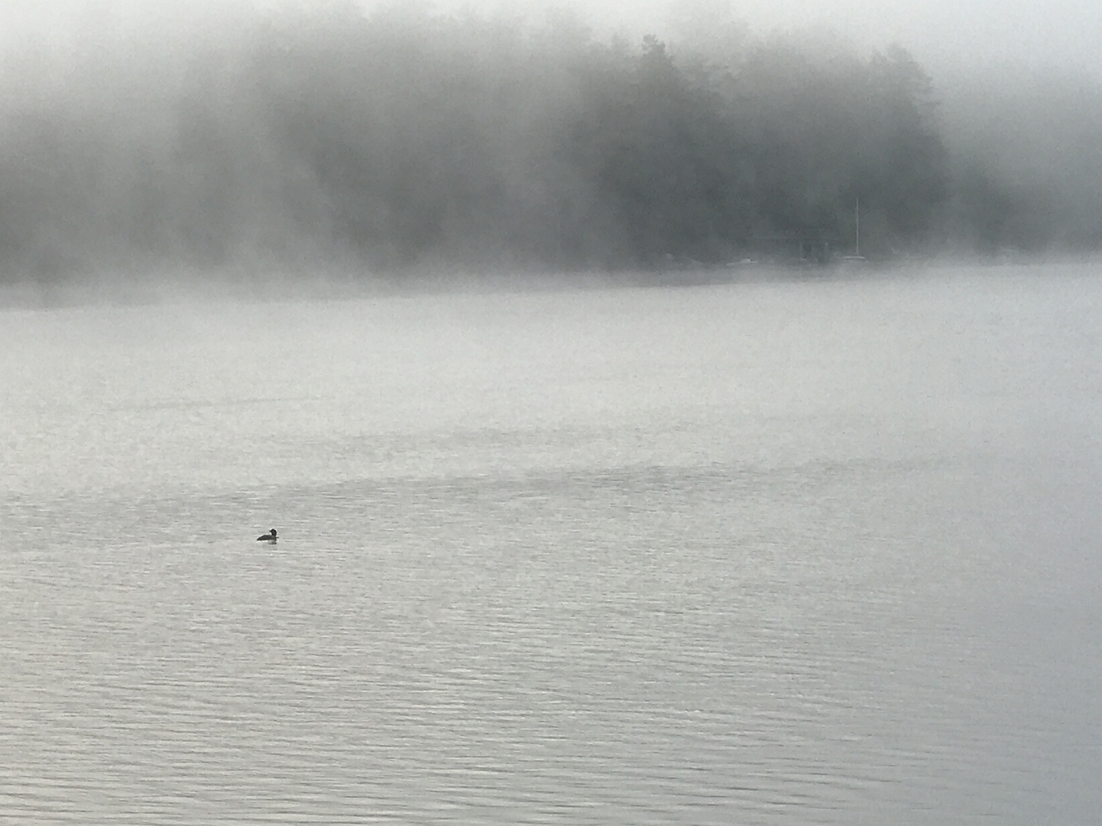 A. Biaggi: Solo Loon on the Lake (Landscape)