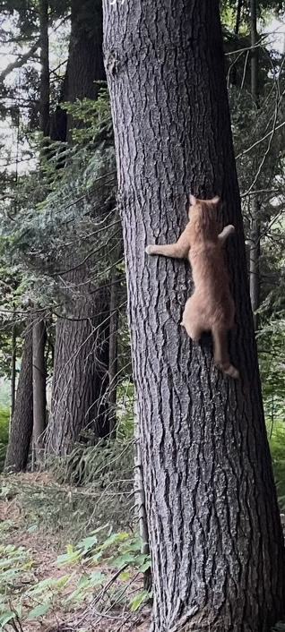 M. Randall: I'm a cat pretending to be a squirrel! (Humor)